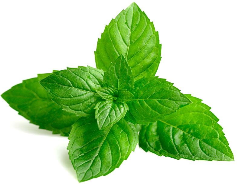 Lekovita biljka koja dobro miriše